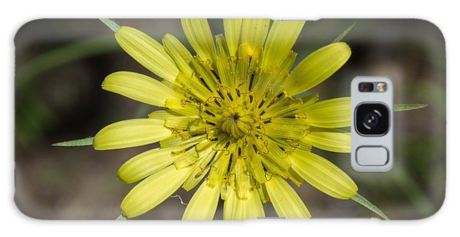 Daisy Galaxy S8 Case featuring the photograph Yellow Daisy by Duomo Photography