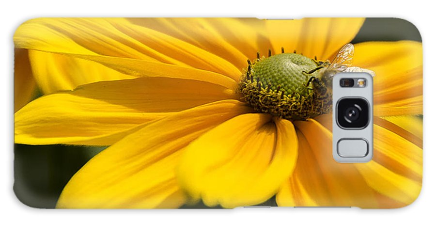 Daisy Galaxy S8 Case featuring the photograph Yellow Daisy by Irene Theriau