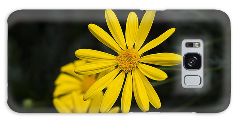 Flowers Galaxy S8 Case featuring the photograph Yellow Daisy by Phil Abrams