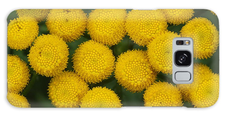 Yarrow Galaxy S8 Case featuring the photograph Yellow Dots by Gene Cyr