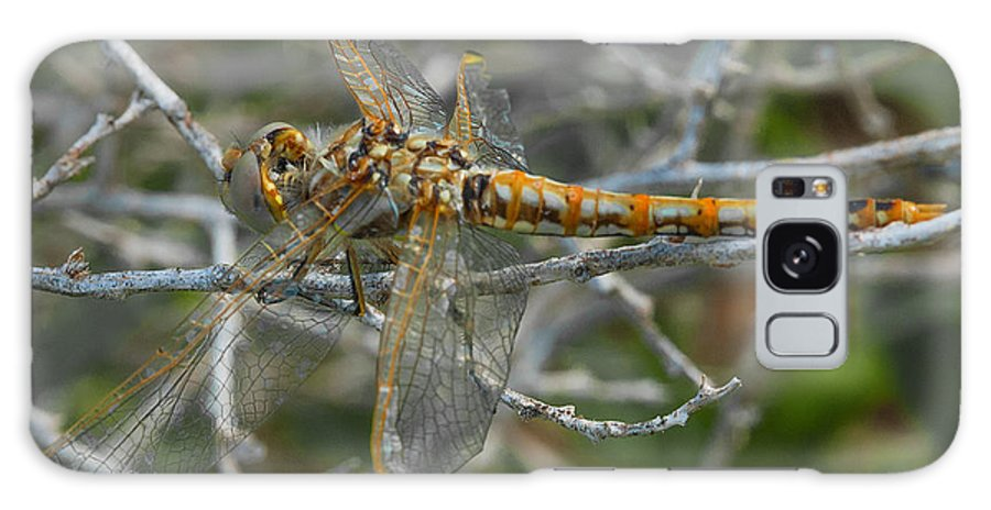 Yellow Dragonfly Galaxy S8 Case featuring the photograph Yellow Dragonfly by Mae Wertz
