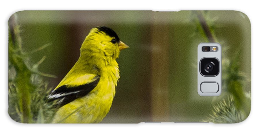 Yellow Finch Galaxy S8 Case featuring the photograph Yellow Finch by Rob Mclean