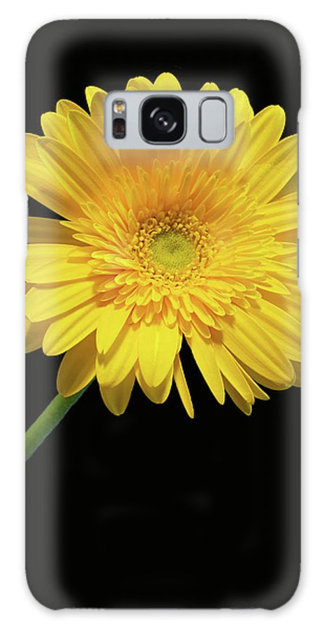 Yellow Gerber Daisy Galaxy S8 Case featuring the photograph Yellow Gerber Daisy by Joan Powell