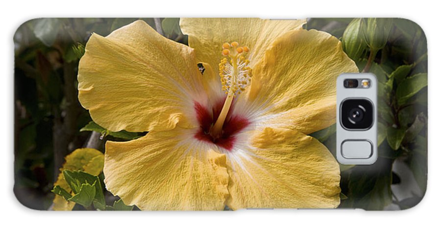Yellow Galaxy S8 Case featuring the photograph Yellow Hibiscus by Diane Macdonald
