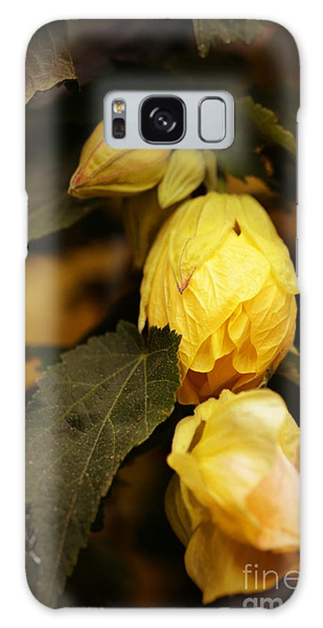 Yellow Hibiscus Galaxy S8 Case featuring the photograph Yellow Hibiscus Late Afternoon by Mary Machare