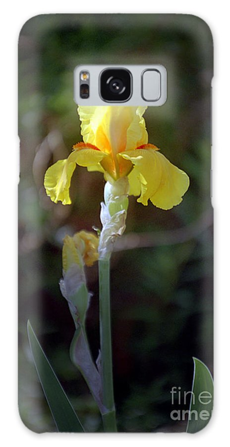 Iris Galaxy Case featuring the photograph Yellow Iris by Kathy McClure