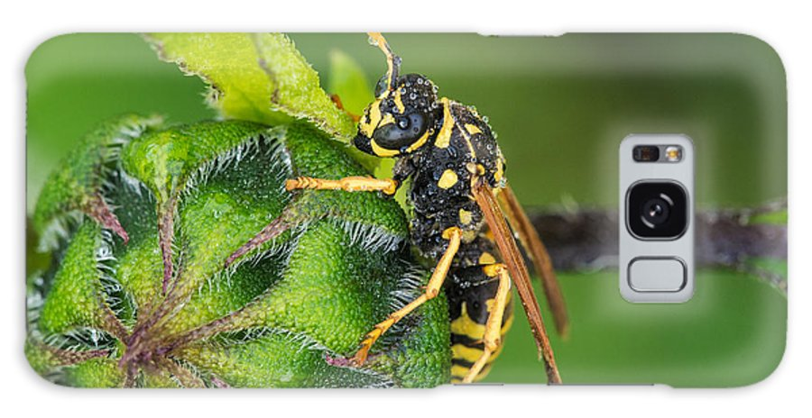 Vespidae Galaxy S8 Case featuring the photograph Yellow Jacket by Jim Zablotny