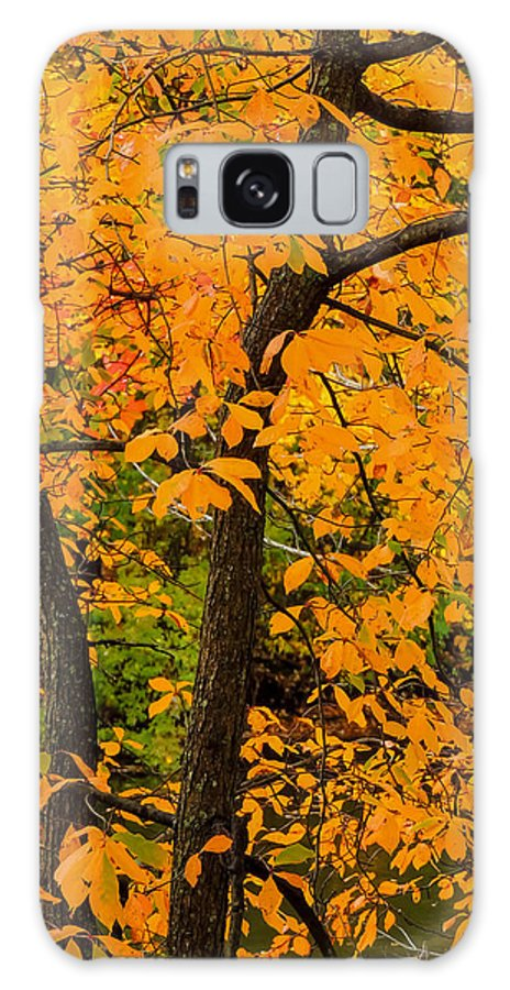 Nature Galaxy S8 Case featuring the photograph Yellow Leaves by Robert Mitchell