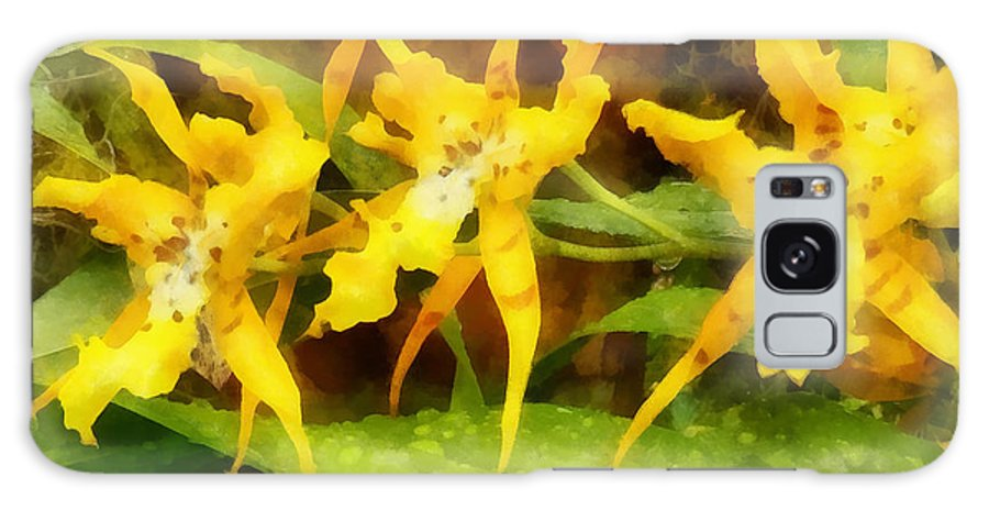Orchid Galaxy S8 Case featuring the photograph Yellow Miltassia Orchids by Susan Savad