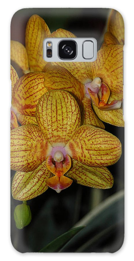 Yellow Orchid Galaxy S8 Case featuring the photograph Yellow Orchids by Suzanne Gaff