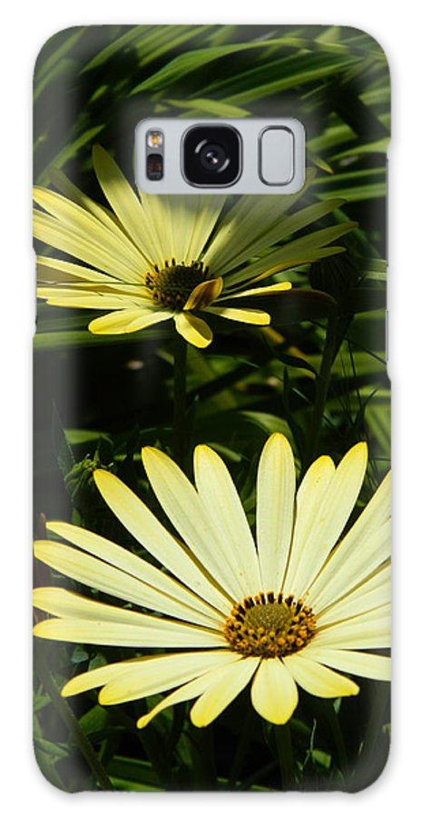 Yellow Galaxy S8 Case featuring the photograph Yellow Osteospermums by Nicki Bennett