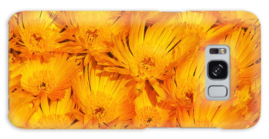 Argyranthemum Galaxy S8 Case featuring the photograph Yellow Radiance by Stephen Edwards