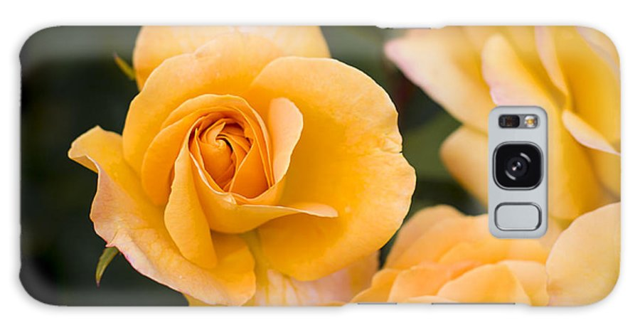 Bloom Galaxy S8 Case featuring the photograph Yellow Rose by Brian Jannsen