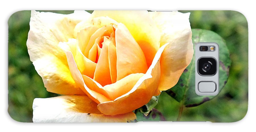 Duane Mccullough Galaxy S8 Case featuring the photograph Yellow Rose by Duane McCullough