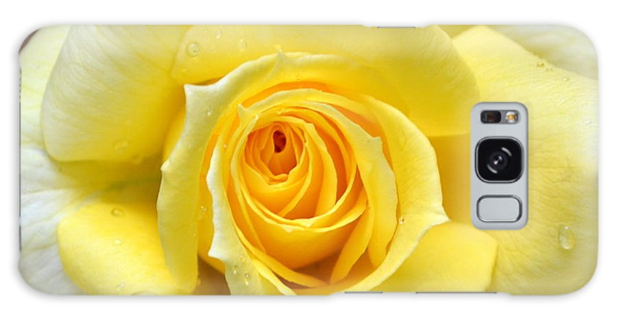 Rose Galaxy S8 Case featuring the photograph Yellow Rose L by Michelle Calkins