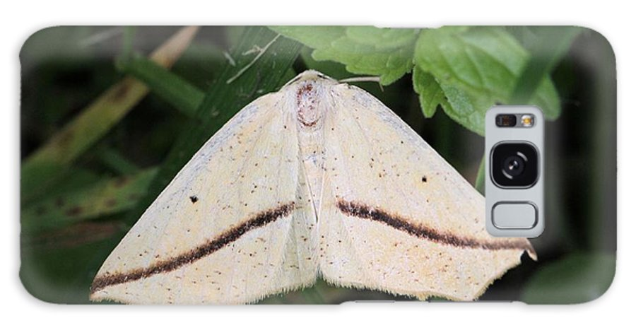 Tetracis Crocallata Galaxy S8 Case featuring the photograph Yellow Slant-line Moth by Doris Potter