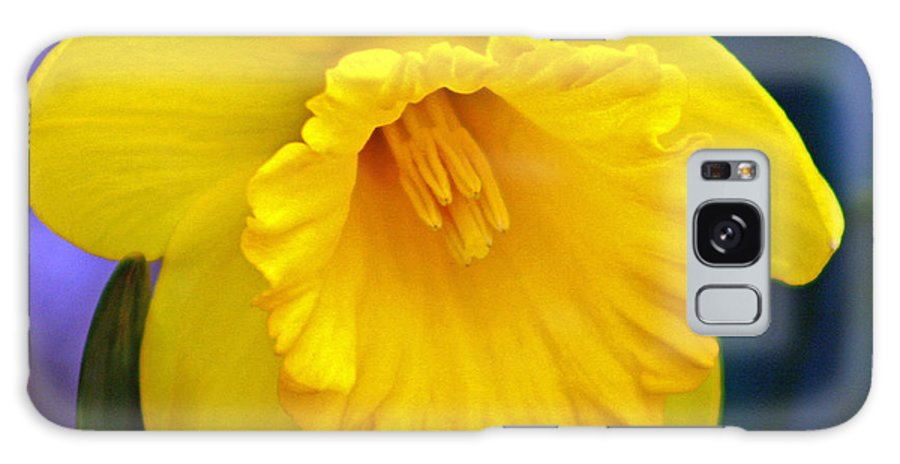Daffodil Galaxy S8 Case featuring the photograph Yellow Spring Daffodil by Kay Novy