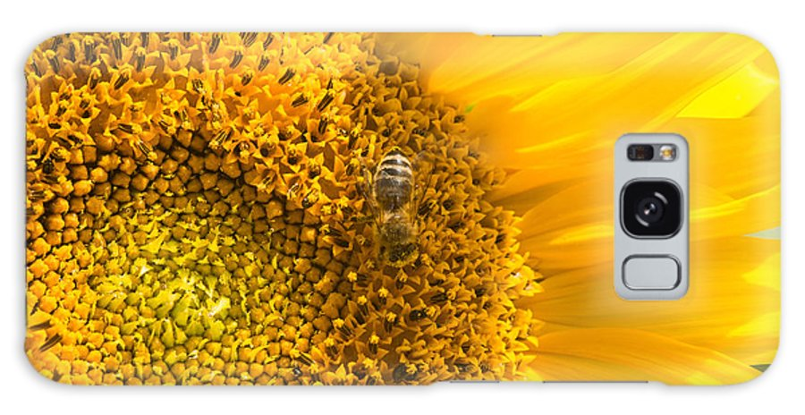 Sunflower Galaxy S8 Case featuring the photograph Yellow Sunflower - Detail by Matthias Hauser