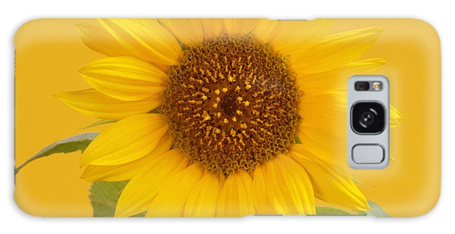 Yellow Galaxy S8 Case featuring the photograph Yellow Sunflower On Yellow by Rosemary Calvert