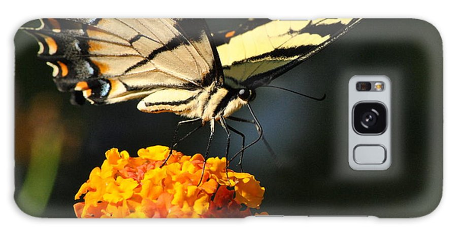Swallowtail Galaxy S8 Case featuring the photograph Yellow Swallowtail by Kelly Nowak