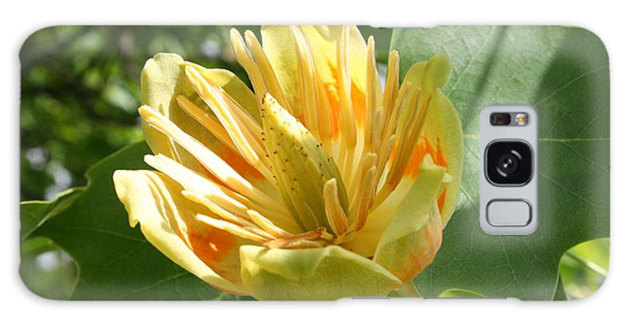 Tulip.tuliptree Galaxy S8 Case featuring the photograph Yellow Tuliptree Flower by Christiane Schulze Art And Photography