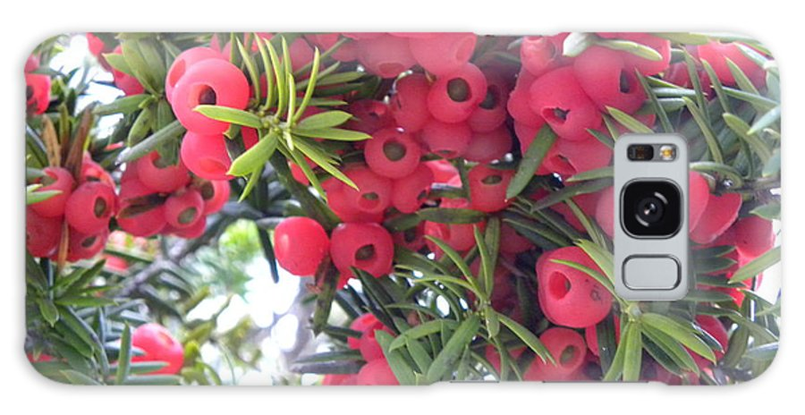 Yew Berry Galaxy S8 Case featuring the photograph Yewberries by Laura Yamada