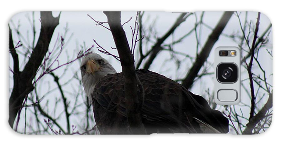 Bald Eagle Galaxy S8 Case featuring the photograph You Look Yummy by Stephanie Kripa