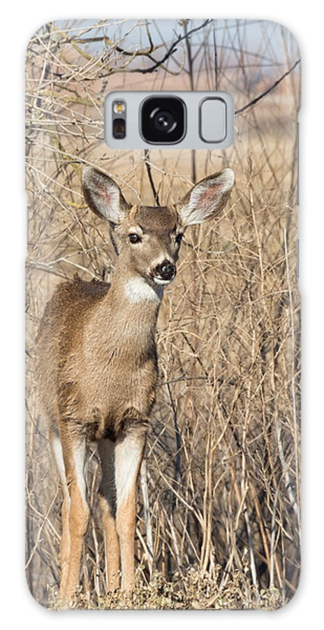 Black Galaxy S8 Case featuring the photograph Young Black-tailed Deer by Kathleen Bishop