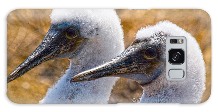 Young Blue Footed Booby Galaxy S8 Case featuring the photograph Young Blue Footed Booby by Mike Fisher