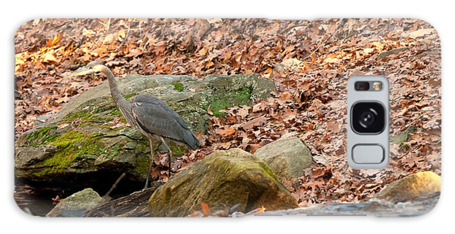 juvenile Great Blue Heron Galaxy S8 Case featuring the photograph Young Blue Heron by Paul Mangold