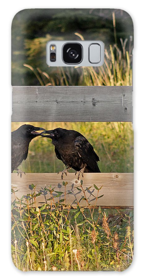 Genus Corvus Galaxy S8 Case featuring the photograph Young Common Ravens by NightVisions