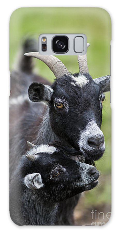 Goat Galaxy S8 Case featuring the photograph Young Goat With Mother by Brandon Alms