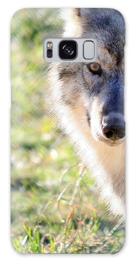 Wolves Galaxy S8 Case featuring the photograph Young Gray Wolf In Light by Neal Eslinger