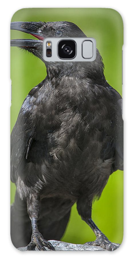 Raven Galaxy Case featuring the photograph Young Raven by Tim Grams