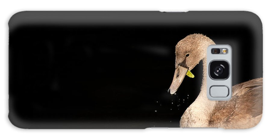 Mute Swan Galaxy S8 Case featuring the photograph Young Swan by Karol Livote