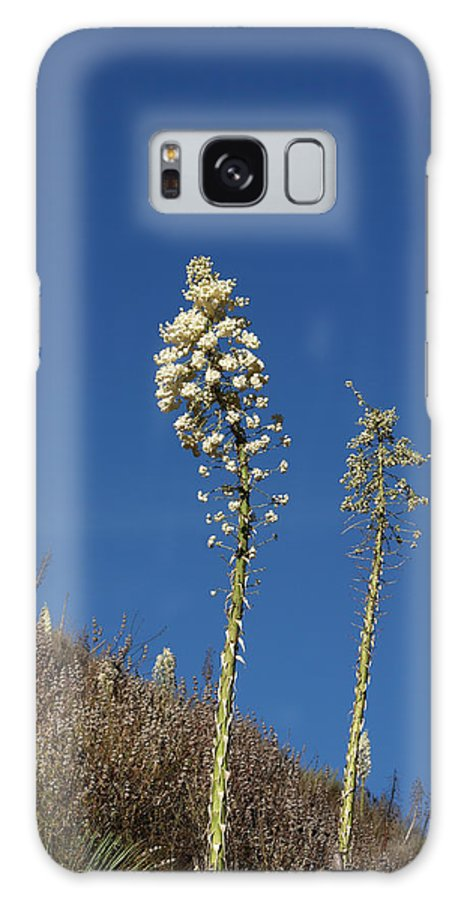 Yucca Galaxy S8 Case featuring the photograph Yucca by Art Block Collections