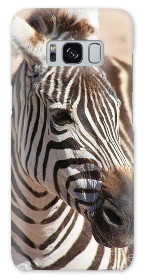 Zebra Galaxy S8 Case featuring the photograph Zebra by Brandi Maher