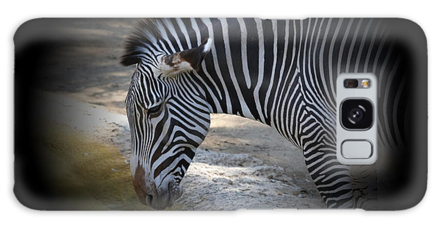 Animal Galaxy S8 Case featuring the photograph Zebra I by Chuck Kuhn