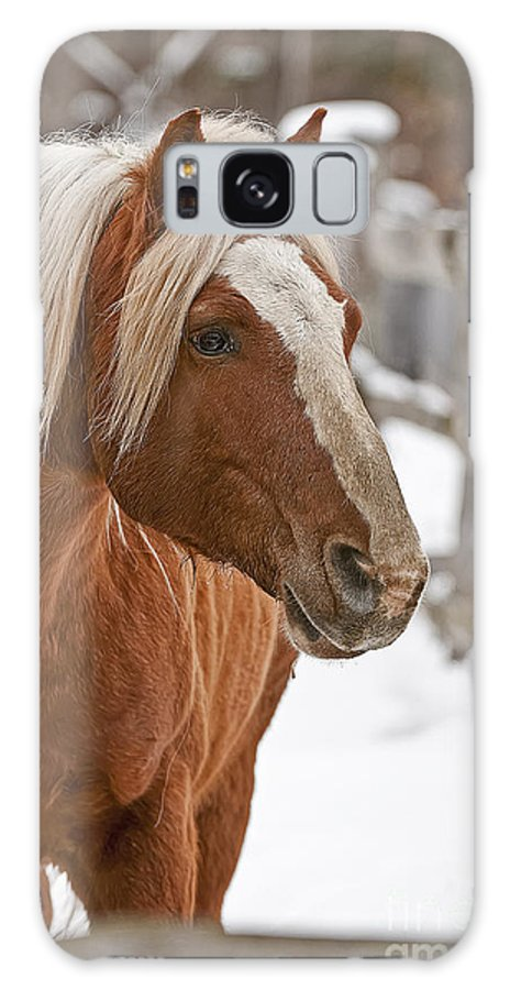 Michael Cummings Galaxy S8 Case featuring the photograph Belgian Horse Lord by Michael Cummings