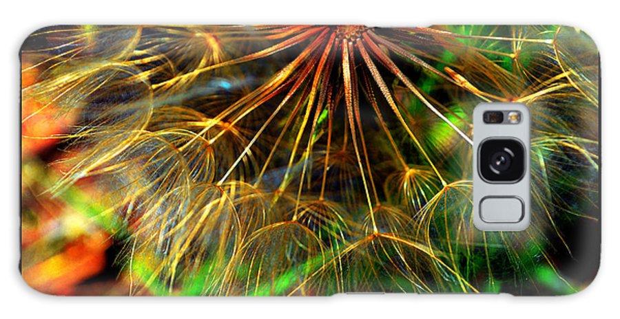 Native Plants Galaxy S8 Case featuring the photograph Dandelion Dreamtime by Susanne Still