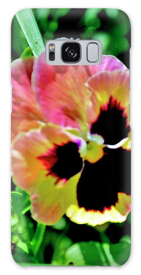 Flowers Galaxy S8 Case featuring the photograph Pink And Yellow Pansy by Helen Haw