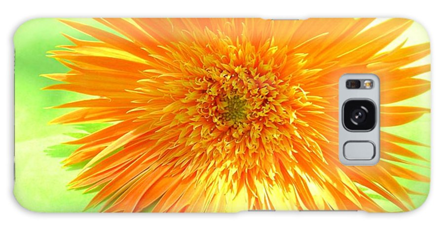 Gerbera Photographs Photographs Galaxy S8 Case featuring the photograph 6174-001c by Kimberlie Gerner