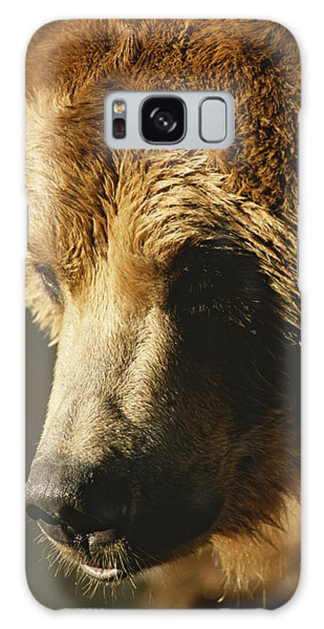 United States Of America Galaxy S8 Case featuring the photograph A Close View Of The Face Of A Grizzly by Tom Murphy