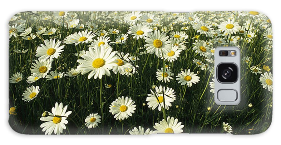 Plants Galaxy S8 Case featuring the photograph A Field Filled With Daisies In Bloom by Klaus Nigge