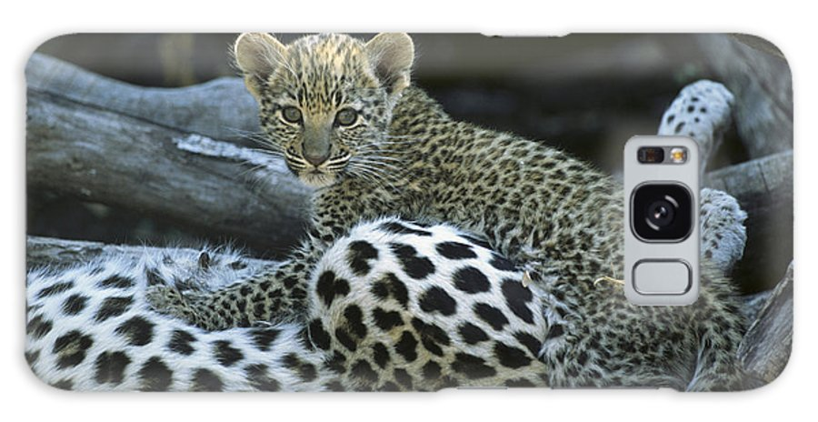Africa Galaxy S8 Case featuring the photograph A Leopard Cub, Panthera Pardus by Beverly Joubert