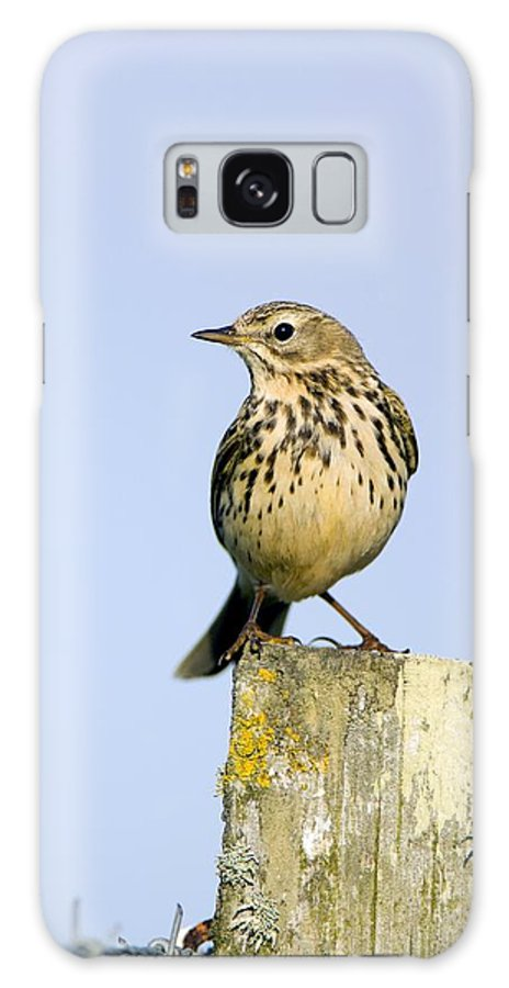 Meadow Pipits Galaxy S8 Case featuring the photograph A Meadow Pipit by Duncan Shaw