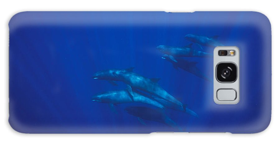 Pacific Islands Galaxy S8 Case featuring the photograph A Pod Of Melon-headed Whales Swimming by Tim Laman