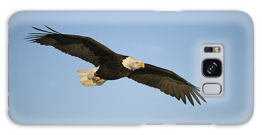 Animals Galaxy S8 Case featuring the photograph An American Bald Eagle In Flight by Klaus Nigge
