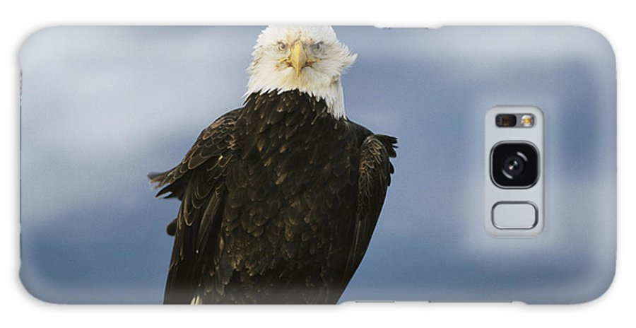 Animals Galaxy S8 Case featuring the photograph An American Bald Eagle Stands by Klaus Nigge