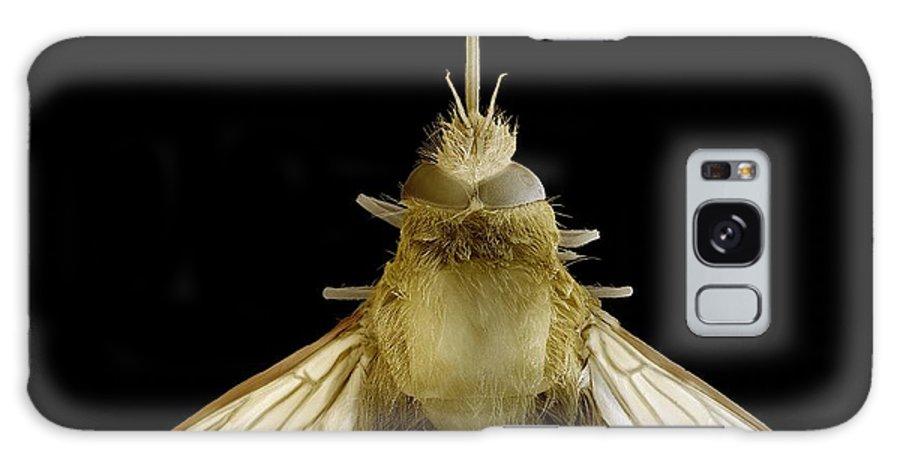 Bee Hawk Moth Galaxy S8 Case featuring the photograph Bee Hawk Moth, Sem by Steve Gschmeissner